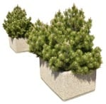 Cut out Bush 0008 | MrCutout.com