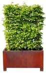 Cut out Bush Fagus Sylvatica 0001 | MrCutout.com