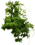 Cut out Bush Other Vegetation 0001 | MrCutout.com