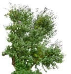 Cut out Bush Other Vegetation 0002 | MrCutout.com