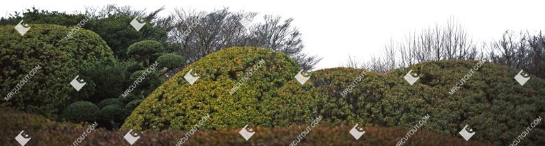 Cut out Bush Thuja Occidentalis Globosum Other Foreground 0001