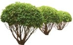Cut out Bush Tree 0002 | MrCutout.com