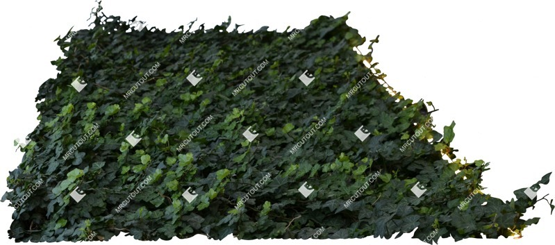 Cut out Climbing Plants Hedera Helix Other Foreground 0001 preview