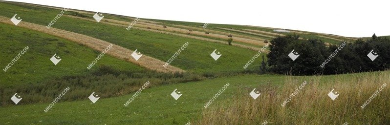 Cut out Field 0003
