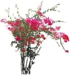 Cut out Flower Climbing Plants 0001 | MrCutout.com