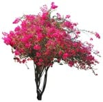 Cut out Flower Climbing Plants 0002 | MrCutout.com