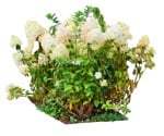 Cut out Flower Hydrangea Arborescens 0001 | MrCutout.com