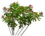 Cut out Flower Hydrangea Paniculata 0001 | MrCutout.com