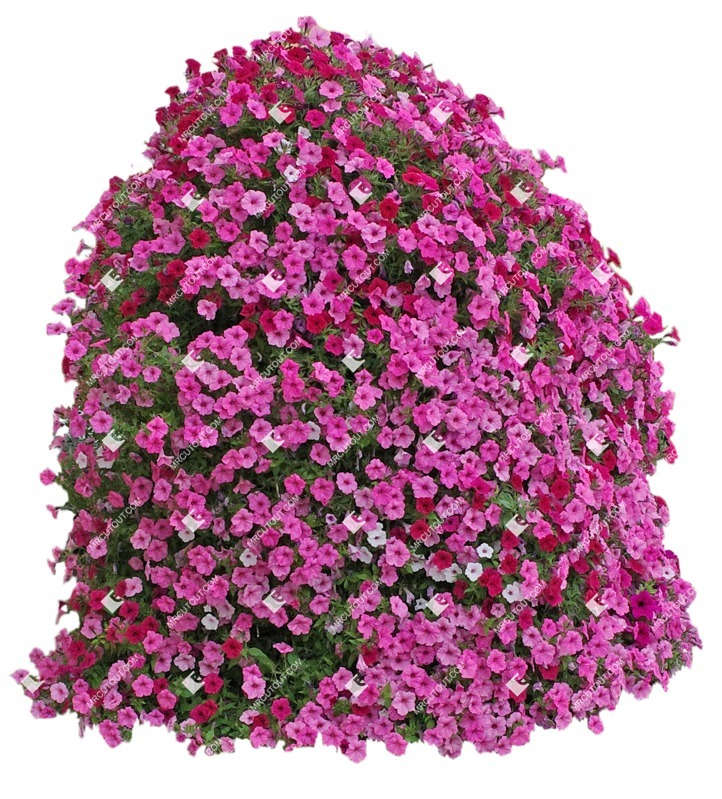 Cut out Flower Petunia 0001