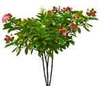 Cut out Flower Potted Flower Hydrangea Paniculata 0001 | MrCutout.com