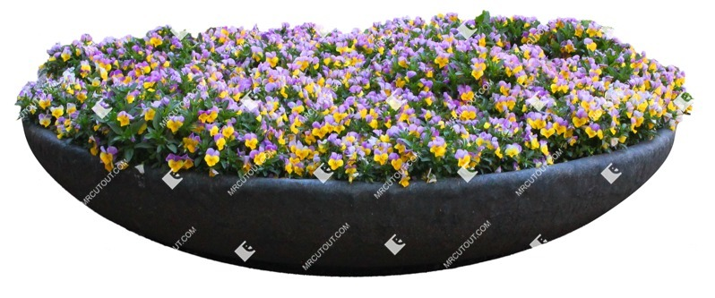 Cut out Flower Potted Flower Viola Wittrockiana Gams 0003 preview