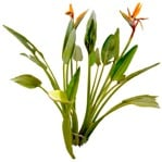 Cut out Flower Strelitzia Reginae 0001 | MrCutout.com
