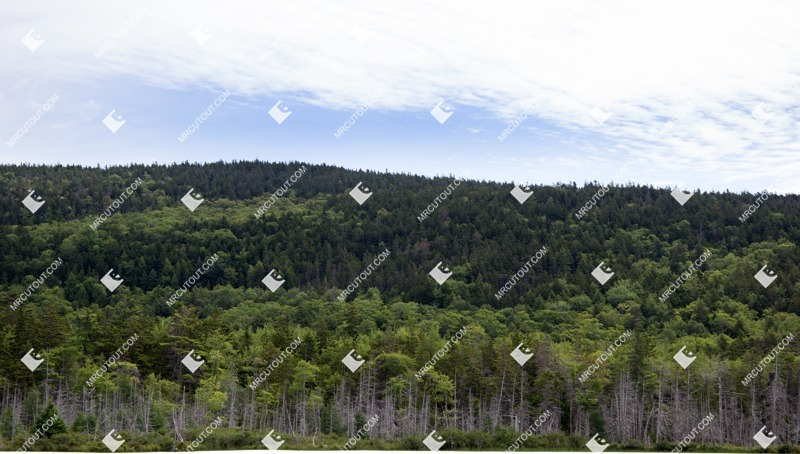 Cut out Hills Trees 0006 preview