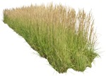 Cut out Other Vegetation Calamagrostis Acutiflora 0001 | MrCutout.com