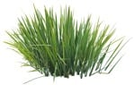 Cut out Other Vegetation Typha Angustifolia 0001 | MrCutout.com