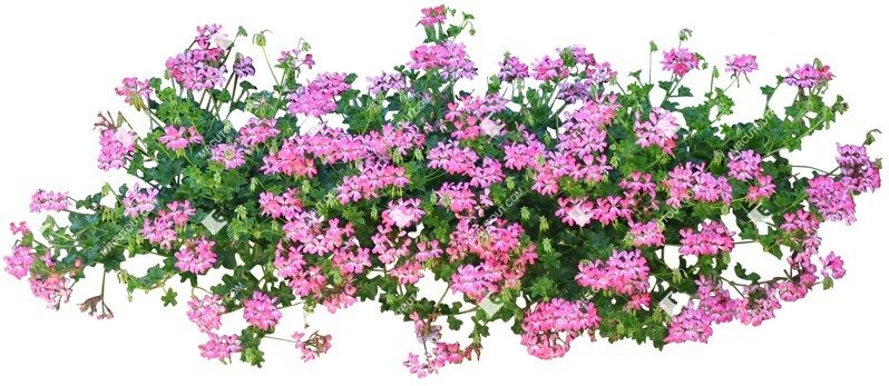 Cut out Potted Flower 0044 preview