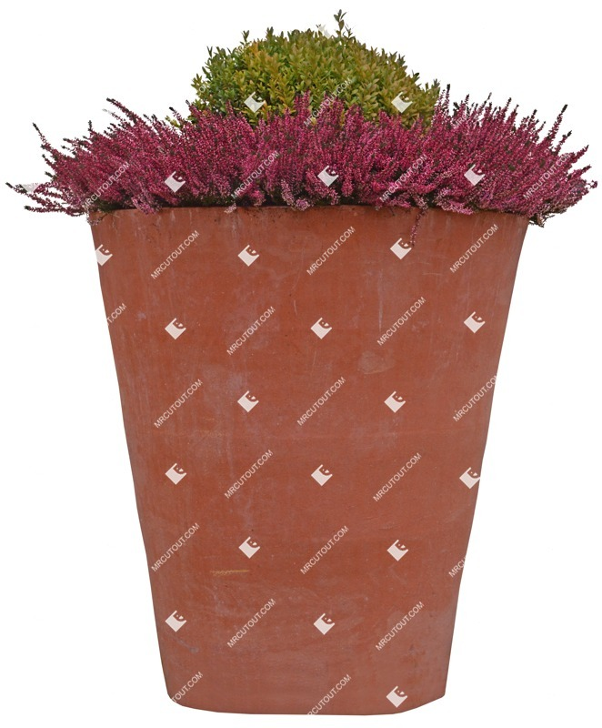 Cut out Potted Flower Lavandula Angustifolia 0001 preview