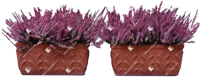 Cut out Potted Flower Lavandula Angustifolia 0002 preview