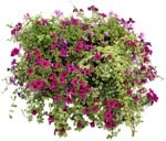 Cut out Potted Flower Petunia 0001 | MrCutout.com