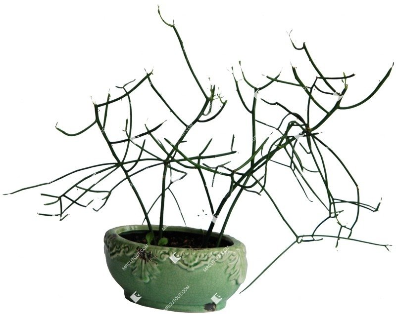 Cut out Potted Flower Rhipsalis Cassutha 0002 preview