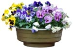 Cut out Potted Flower Viola Wittrockiana Gams 0007 | MrCutout.com