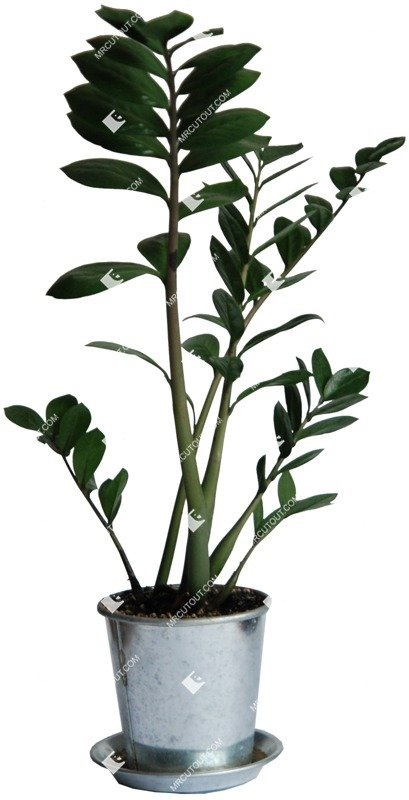 Cut out Potted Flower Zamioculcas Zamiifolia 0001 preview