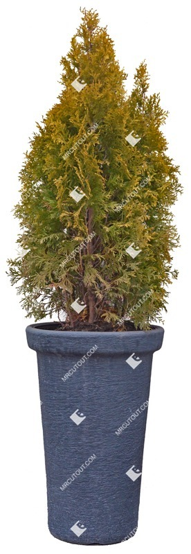 Cut out Potted Tree 0004