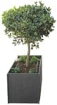 Cut out Potted Tree 0006 | MrCutout.com