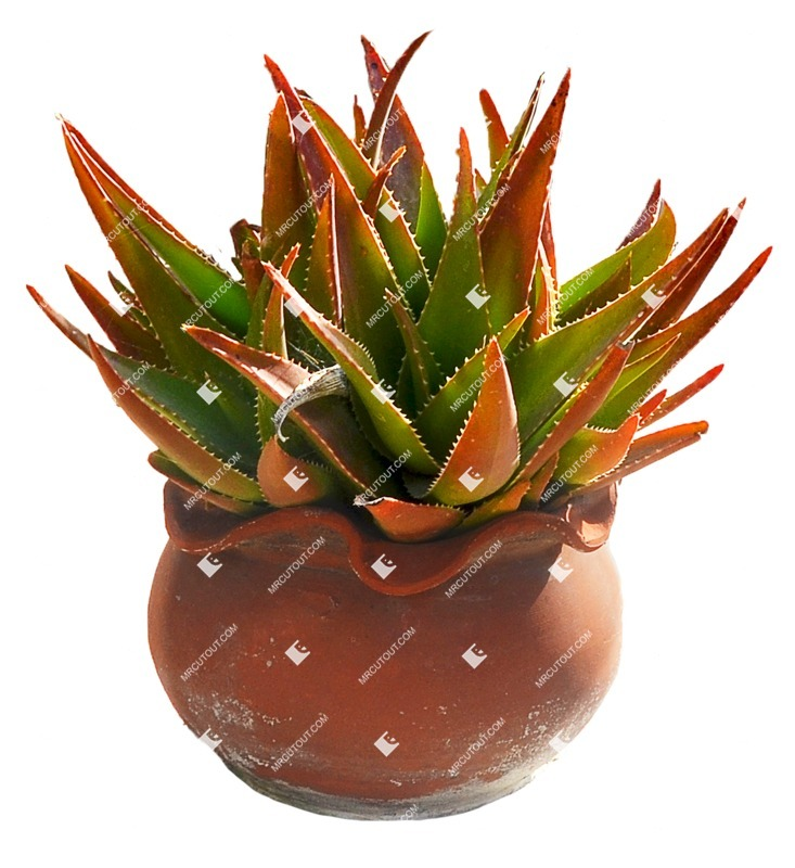 Cut out Potted Tree Aloe Perfoliata 0001 preview