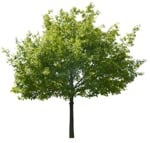 Cut out Tree 0101 | MrCutout.com