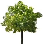 Cut out Tree 0150 | MrCutout.com