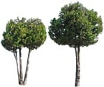 Cut out Tree 0276 | MrCutout.com
