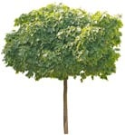 Cut out Tree 0286 | MrCutout.com