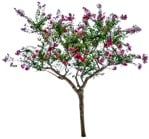 Cut out Tree Lagerstroemia Indica 0002 | MrCutout.com