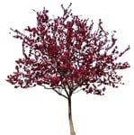 Cut out Tree Malus Purpurea 0001 | MrCutout.com