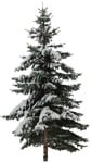 Cut out Tree Picea Abies 0002 | MrCutout.com