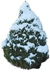 Cut out Tree Picea Glauca Conica 0001 | MrCutout.com