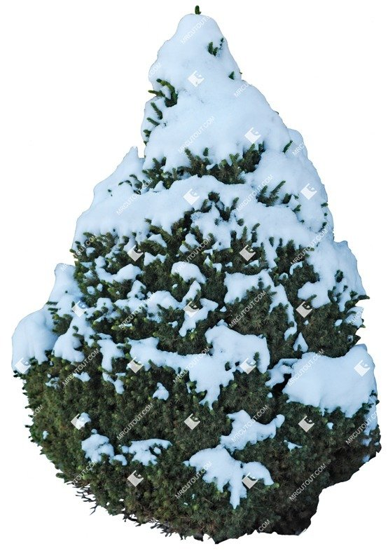 Cut out Tree Picea Glauca Conica 0001 preview