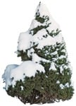 Cut out Tree Picea Glauca Conica 0003 | MrCutout.com