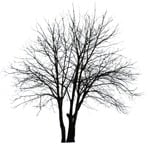 Cut out Tree Populus 0003 | MrCutout.com