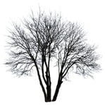 Cut out Tree Populus 0004 | MrCutout.com
