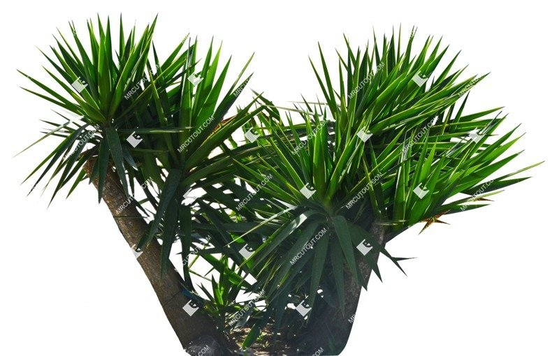 Cut out Tree Potted Tree Dracaena Marginata 0001 preview