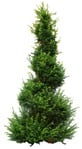 Cut out Tree Potted Tree Thuja Occidentalis 0008 | MrCutout.com