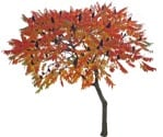 Cut out Tree Rhus Typhina 0001 | MrCutout.com