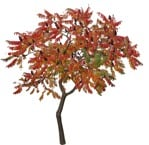 Cut out Tree Rhus Typhina 0003 | MrCutout.com