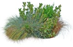 Cut out Wild Grass Bush Other Vegetation 0001 | MrCutout.com