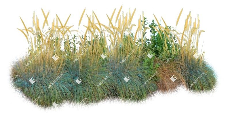 Cut out Wild Grass Bush Other Vegetation 0004 preview