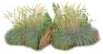 Cut out Wild Grass Bush Other Vegetation 0005 | MrCutout.com