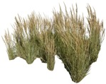 Cut out Wild Grass Other Vegetation Calamagrostis Acutiflora 0004 | MrCutout.com