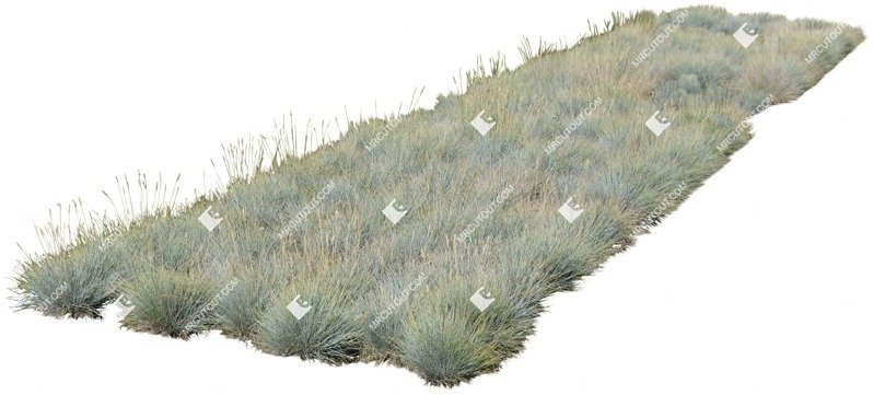 Cut out Wild Grass Other Vegetation Helictotrichon Sempervirens 0001 preview